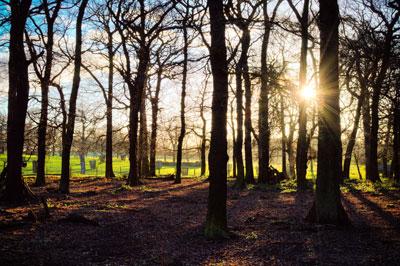 image - woods